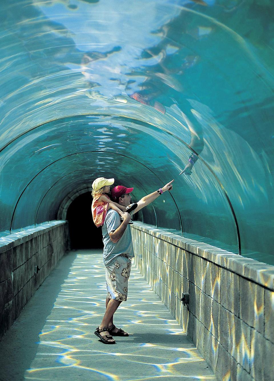 Harborside Resort at Atlantis Timeshares